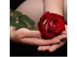 Querida Rosa