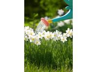 Como regar suas plantas durante o racionamento de água