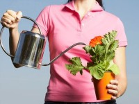 Como regar suas plantas nas férias e viajar tranquilo