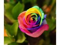 Significados: Cores das Rosas